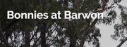 Bonnie's at Barwon